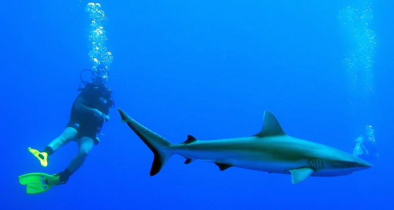 poor decision to swim with sharks